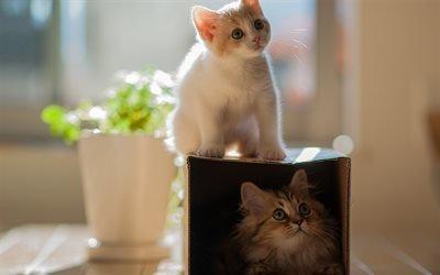 коробка, котята, коты, кошки