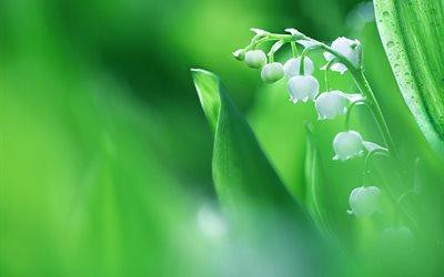 макро, цветок, ландыш, весна