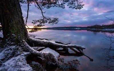 Зима, Закат, Озеро, Дерево, Корни, Швеция