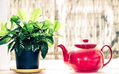 горшок, цветок, листья, чайник