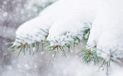 природа, зима, снег, ветки, ель, ёлка, капли