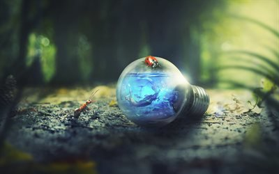 экология, 4к, лампочка, лес, муравьи, божья коровка, креатив