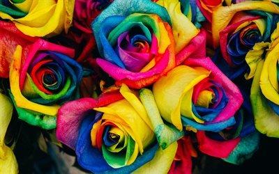 разноцветные розы, 4к, бутоны, розы, разноцветные цветы