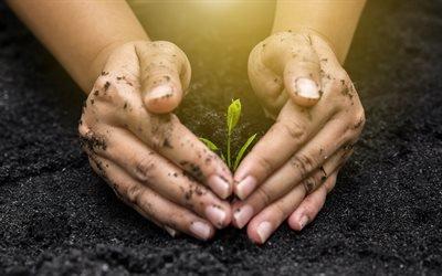 Бережіть Землю, екологія, зелений паросток, руки, Бережіть навколишнє середовище, Берегите Землю, экология, зеленый росток, окружающая среда