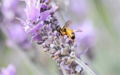 пчела, мёд, цветок