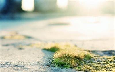 земля, мох