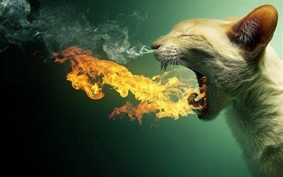 кот, огонь, креатив