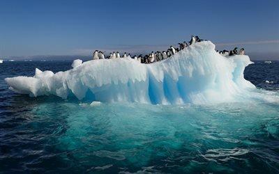 пингивин, лёд, вода, море