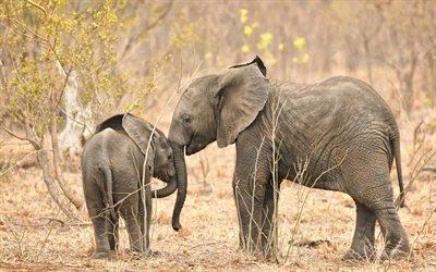 маленький слон, слоник, Африка, дикая природа, слоны