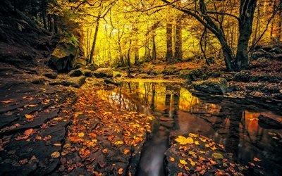 осінь, ліс, озеро, жовте листя, осень, лес, желтые листья