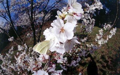 природа, весна, деревья, цветы, ветка, листья, небо