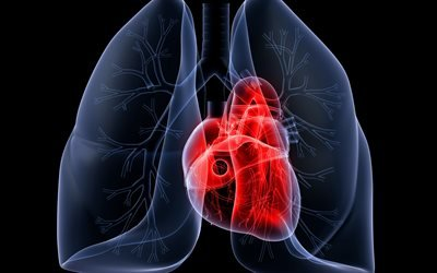 сердце, легкие, 3д, ренген, heart, lungs, 3D, X-ray