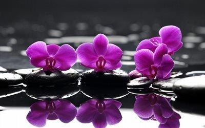 орхідеї, орхідея, орхидея
