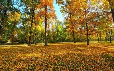 осенний пейзаж, осень, парк, желтые листья, autumn landscape, autumn, park, yellow leaves