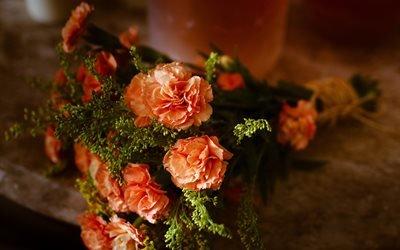 цветы, букет, гвоздики
