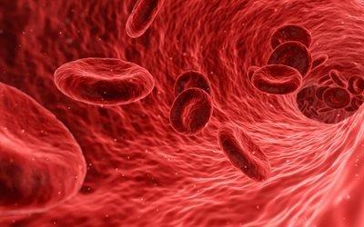 кровь, клетки, сосуды, 3д