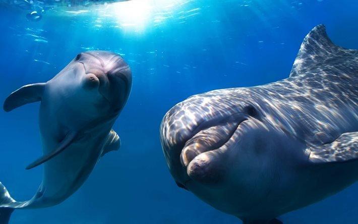 Дельфины, подводный мир, Дельфіни, підводний світ