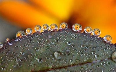 капля росы, цветок, макро, желтый цветок, листья, природа, капли дождя