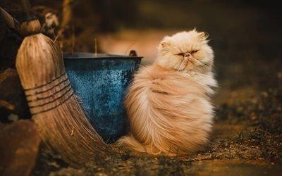 пушистый кот, домашние животные, коты, коричневый кот
