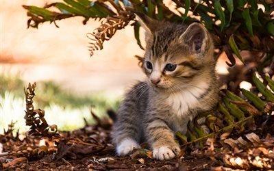 котёнок, животное, природа, листья