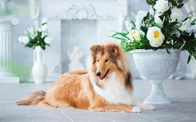 собака, колли, пёс, животное, вазы, цаеты