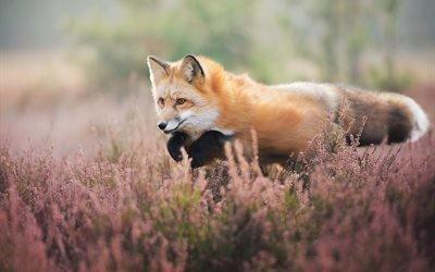 животное, лисица, лиса, прыжок, цветы, природа