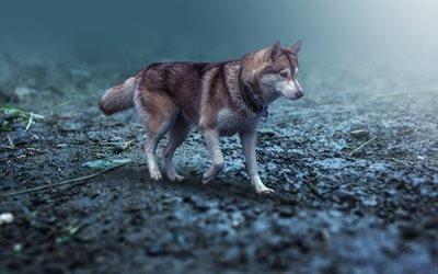 животное, собака, пёс, ошейник, природа, прогулка