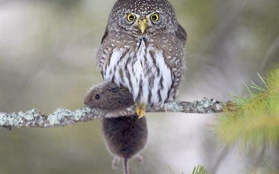 природа, ветка, птица, сова, сыч, гном, мышь, добыча
