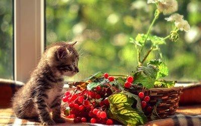 животное, котёнок, окно, корзина, ветки, калина, листья, ягоды, цветок, герань