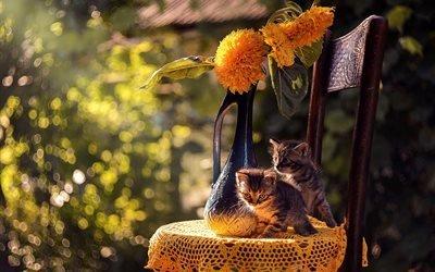 животные, котята, стул, салфетка, цветы, природа, ваза, боке