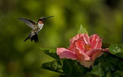 колибри, цветок