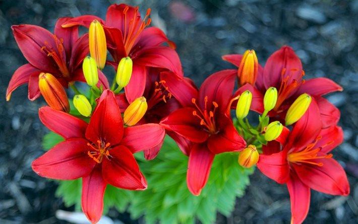 цветок, красный цветок