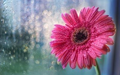 Дождь, Стекло, Капли, Цветок, текстуры