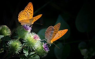 бабочка, природа, оранжевый, растение, черный фон