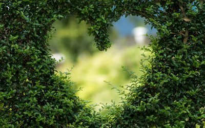 сердце, любовь, роман, день святого валентина, романтические, растение