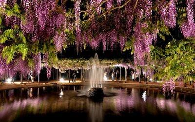 парк, водоём, вода, фонтан, деревья, цветы, глициния, вечер, люди