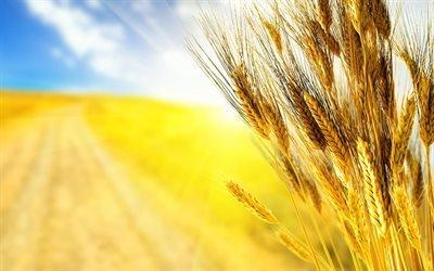 прапор України, пшениця, Україна, врожай, флаг Украины, пшеница, Украина, урожай
