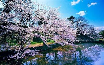 природа, весна, озеро, берег, деревья, цветение, небо, облака, отражение