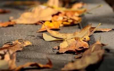 Сухие листья, сухе листя