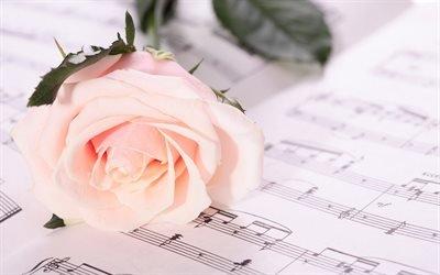 розы, роза, ноты